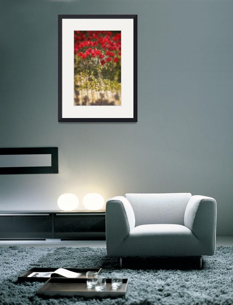 """""""Poppies GLP-25&quot  (2014) by GillianLloydPhotography"""
