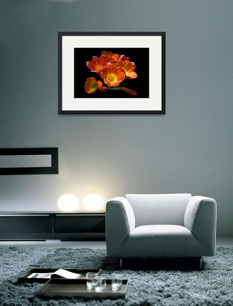 """""""Floral Still Life (Freesia)&quot  (2012) by davidbricher"""