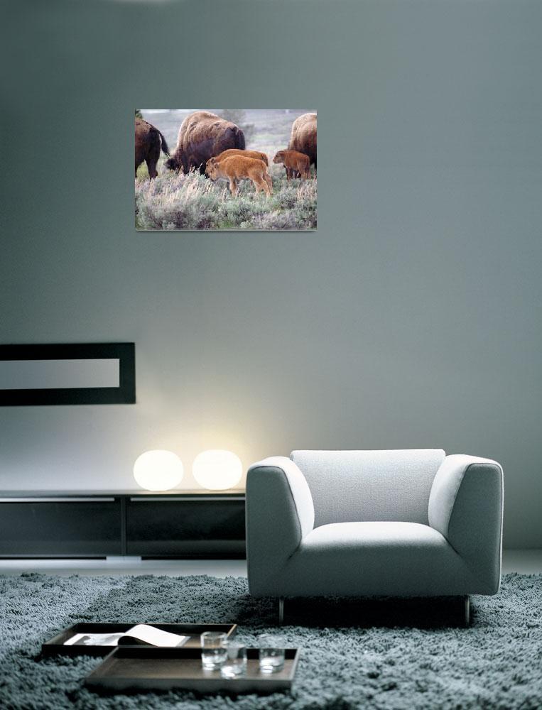 """Bison Calves in the Rain""  (2009) by 2dogstudio"
