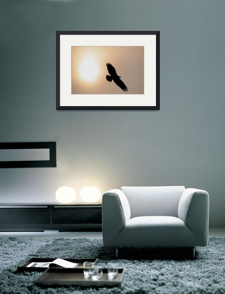 """""""Eagle Silhouette&quot  (2011) by JohnFitzgerald"""