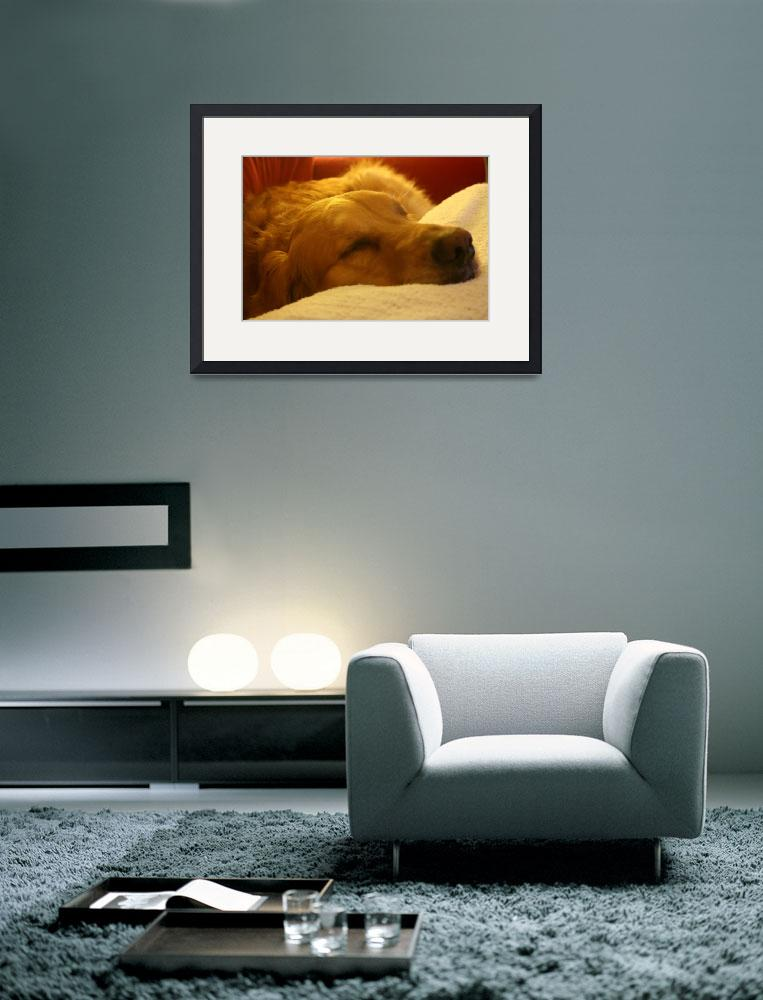 """""""Warm Nap""""  by pnkdesigns"""