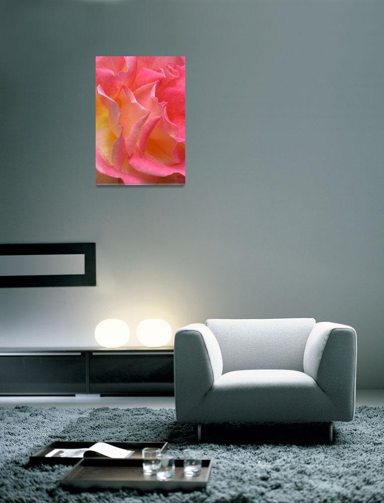 """""""""""Hot Pink Yellow Rose 2"""" #3070513&quot  (2013) by achimkrasenbrinkart"""