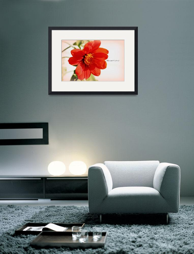 """""""Tithonia Rotundiflora ~ Mexican Sunflower&quot  by flowerchild6482"""