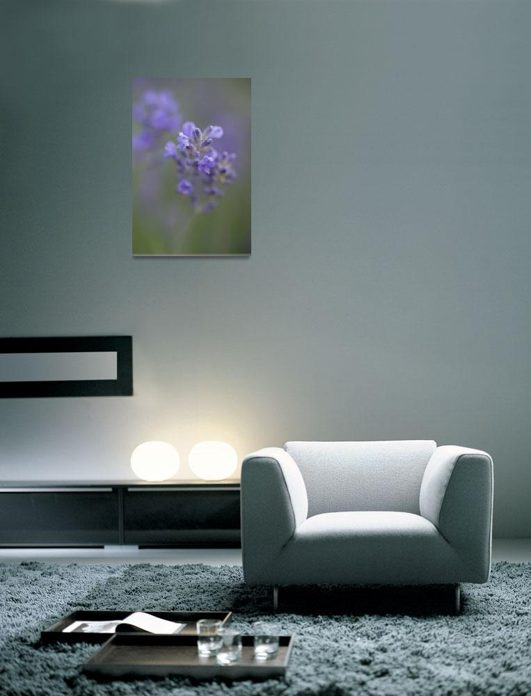 """Lavender""  (2009) by Lotus21"