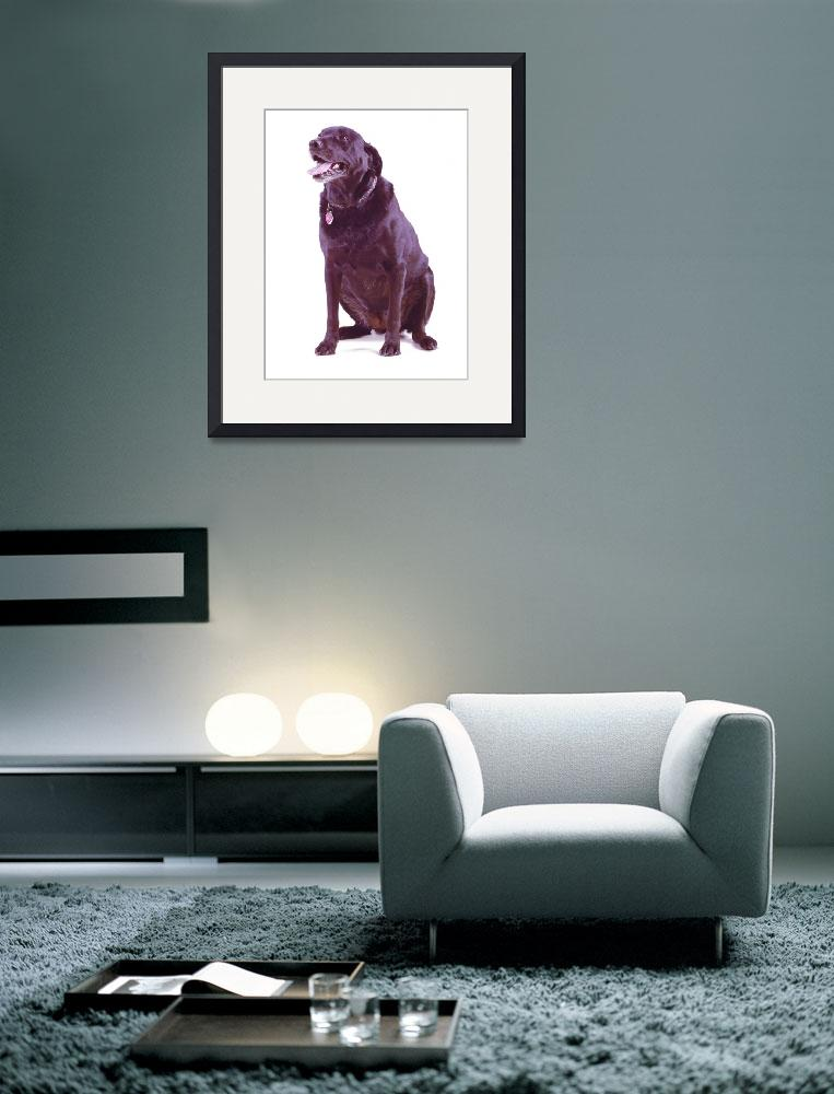 """""""dog""""  (2003) by atlasphotographic"""