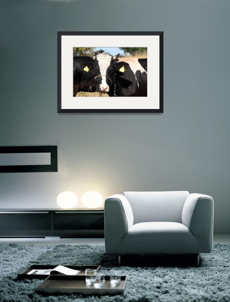 """""""Black and white cow in pasture""""  (2008) by Piotr_Marcinski"""