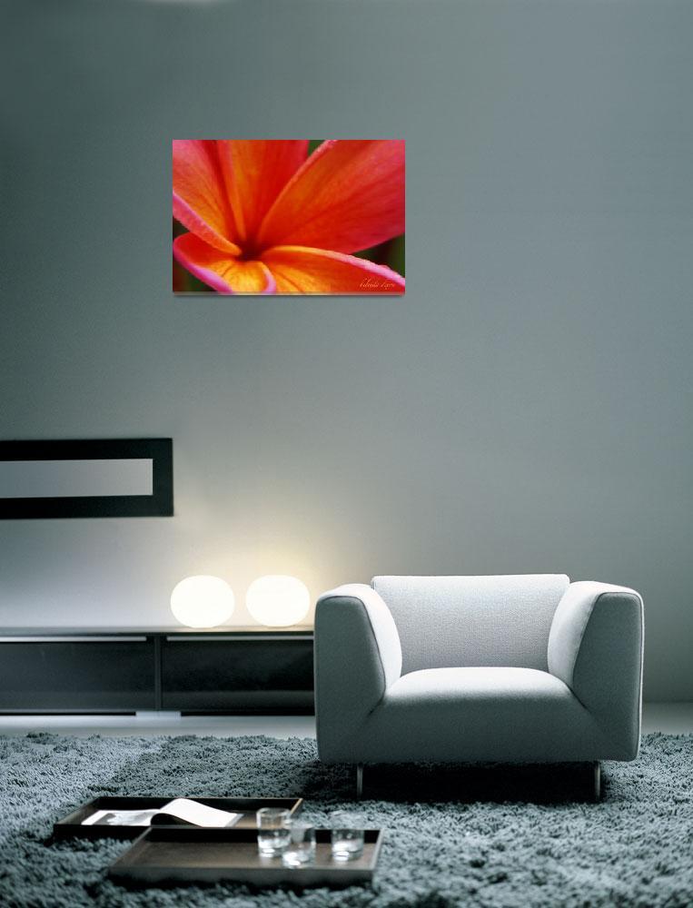 """Plumeria Orange Pink 815&quot  (2008) by bybelinda"