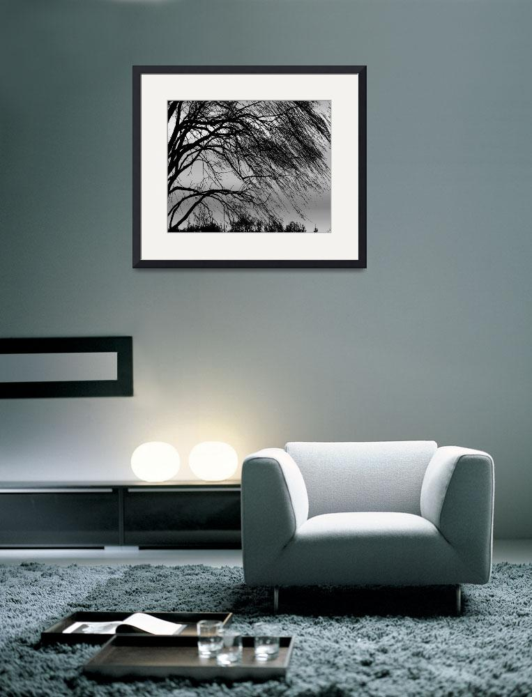 """Weeping Willow Tree Blowing in the Wind&quot  (2007) by PhotographsByCarolFAustin"