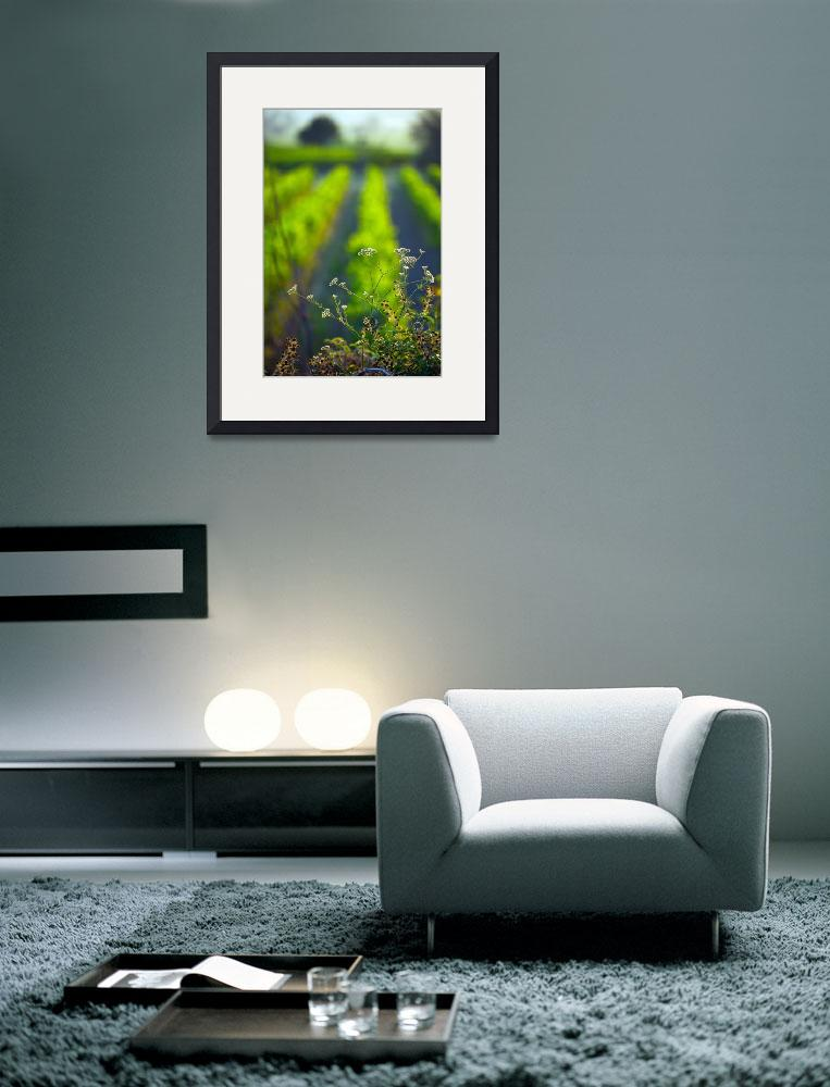 """""""Summer in the Vineyard&quot  (2010) by ImageArt-Photography"""