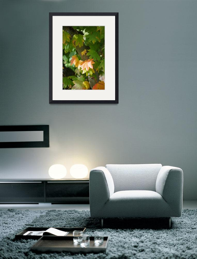 """NW Autumn&quot  (2011) by aRTPhotograph"