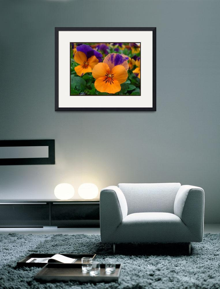 """""""Prismatic Pansies&quot  by ccmerino"""