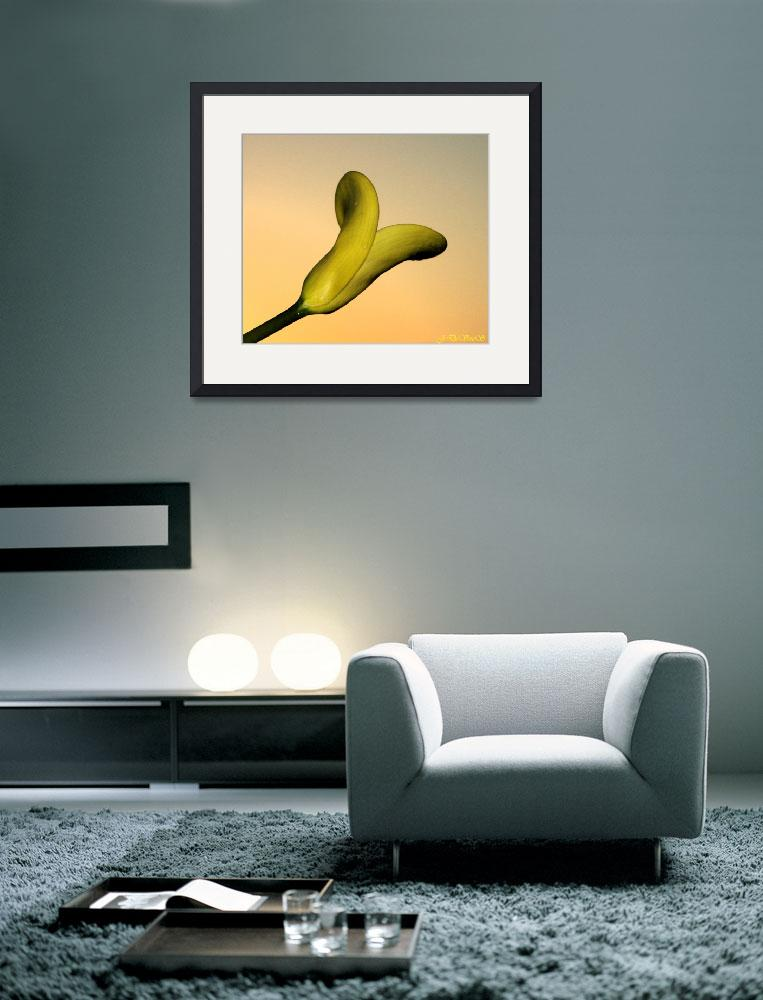 """""""Yellow Lilly&quot  by NaturePlusStudios"""