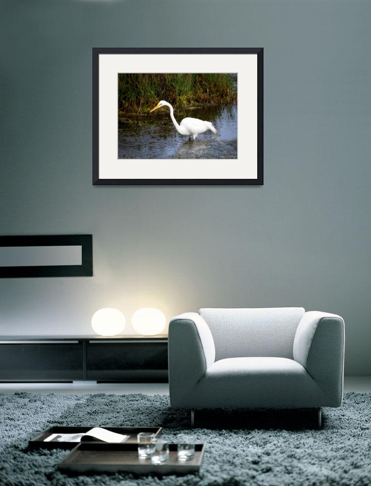 """""""Great Egret in the Wild&quot  (2010) by ChrisCrowley"""