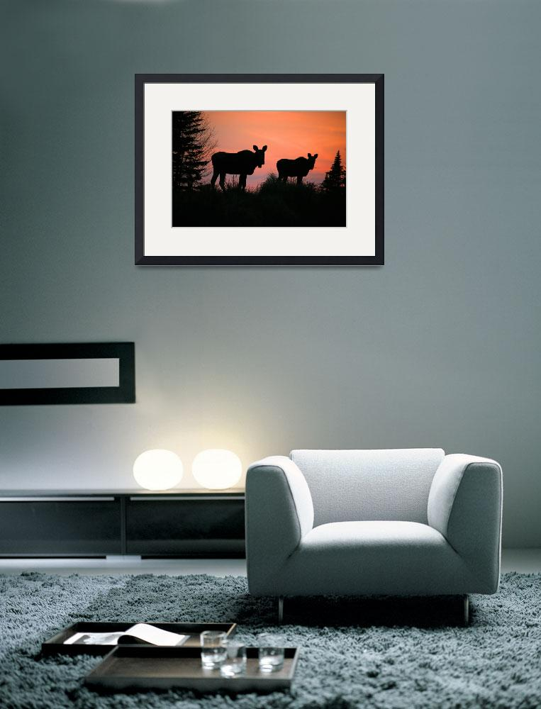"""""""Moose Silhouetted At Sunset, Near Gunner"""