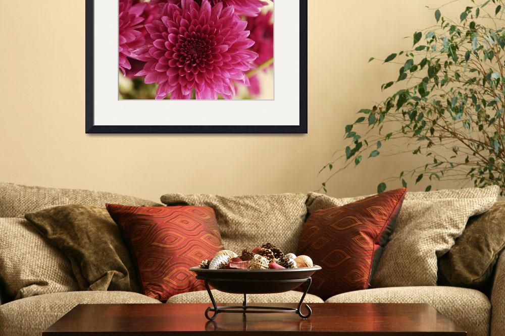 """""""Cluster of Pink Mums, Close-up_2333&quot  (2005) by AmbientCreations"""