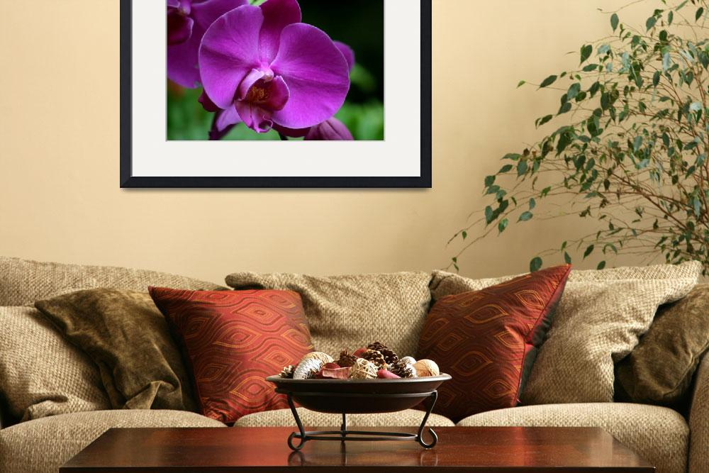 """Purple Orchid&quot  (2009) by MNTPhoto"