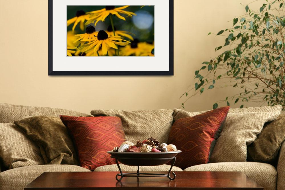"""""""BlackEyed Susans&quot  by roscoedv"""