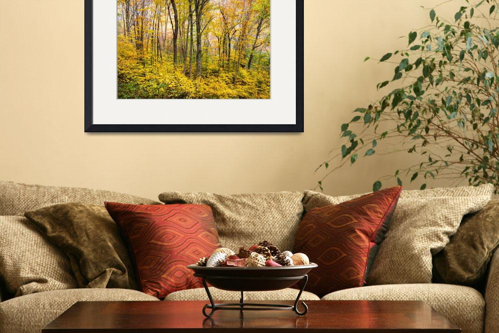 """Autumn Western NC Fall Foliage - Forest for the Tr&quot  (2012) by DAPhoto"