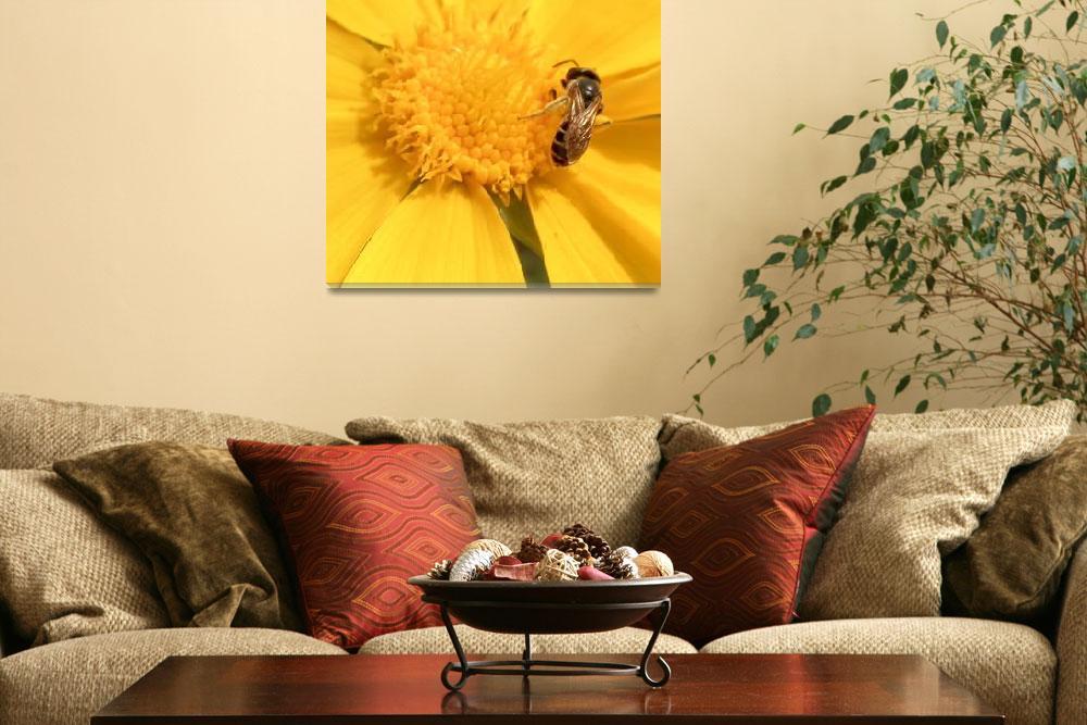 """Bee #1&quot  (2011) by AmeliaSchwencke"