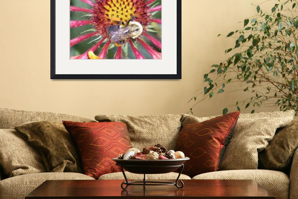 """bumble bee and flower art print""  (2010) by derekmccrea"