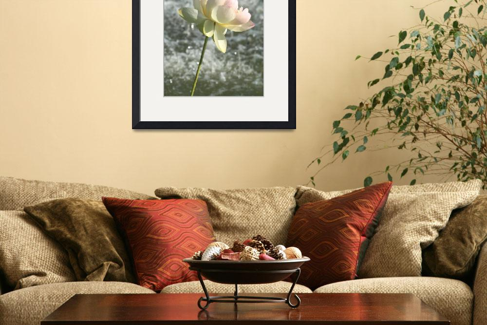 """""""FOUNTAIN ROSE&quot  (2007) by shutterfly"""