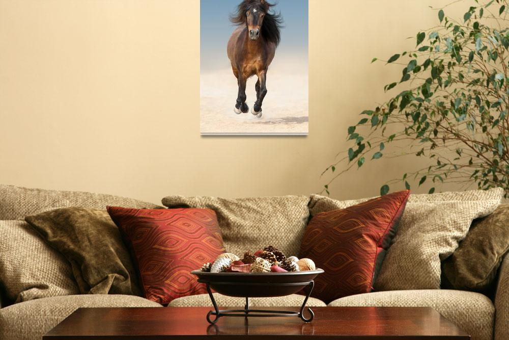 """Horse Framed Photo Print""  by buddakats1"
