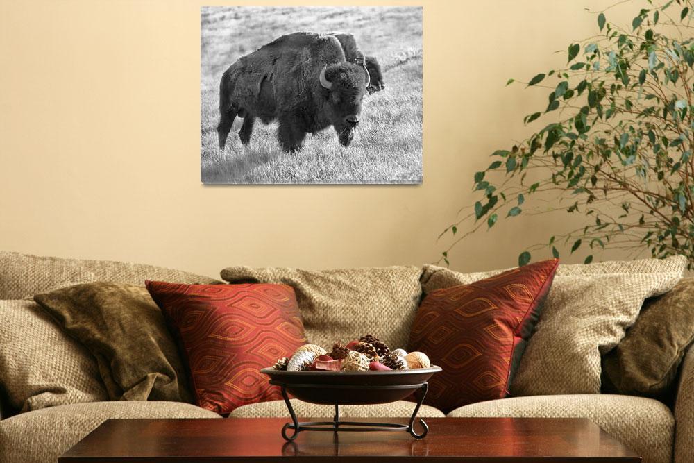 """Buffalo Chew&quot  (2004) by buffaloworks"