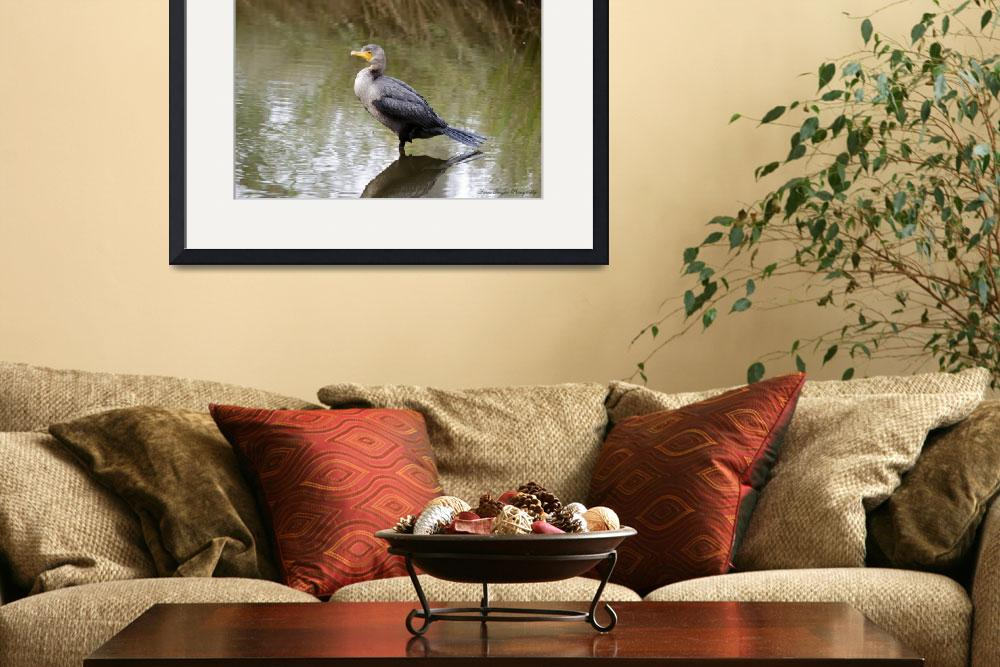 """""""Double-crested Cormorant&quot  (2013) by WildAboutNaturePhotography"""