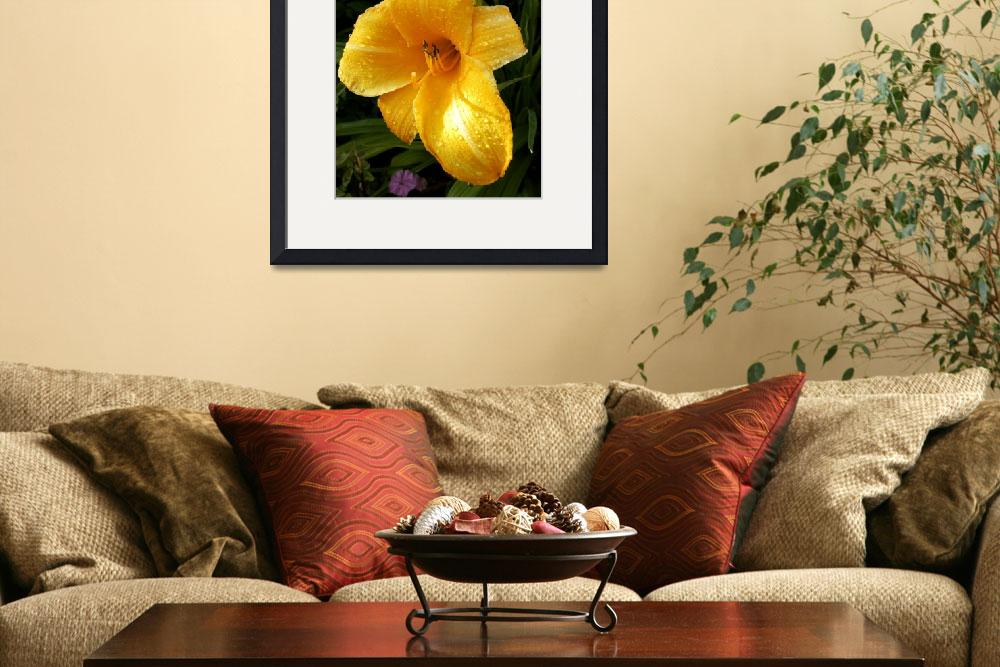 """""""Damp Day Lily&quot  (2010) by AlanPickersgill"""