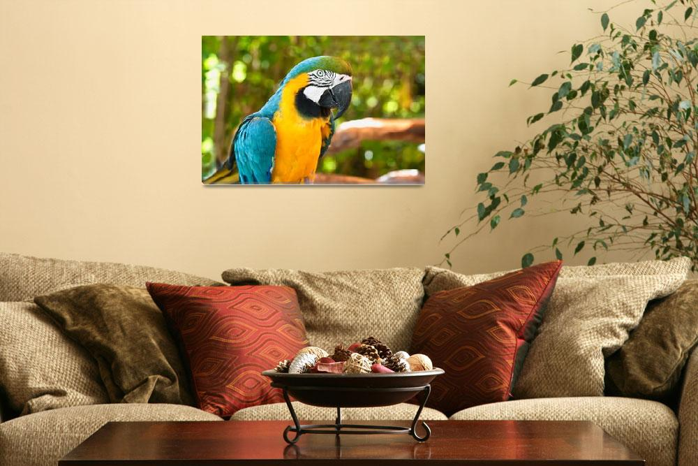 """""""Blue and Gold Macaw""""  (2010) by mjphoto-graphics"""