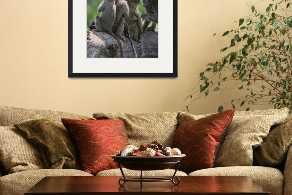 """""""Baboon Babies&quot  (2014) by SederquistPhotography"""