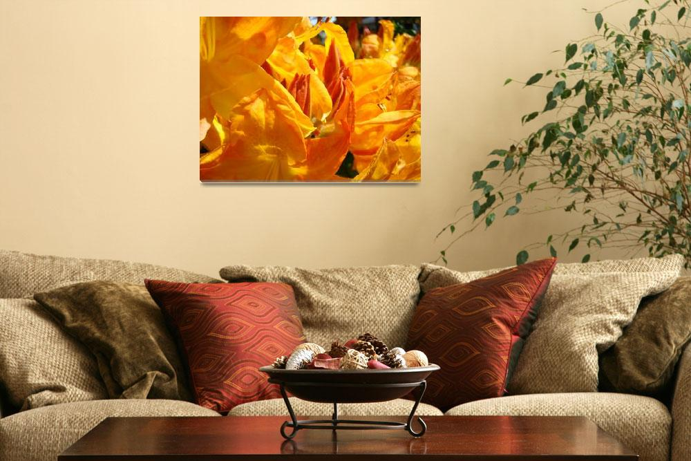 """Nature Fine Art Photography Prints Rhodies""  (2011) by BasleeTroutman"