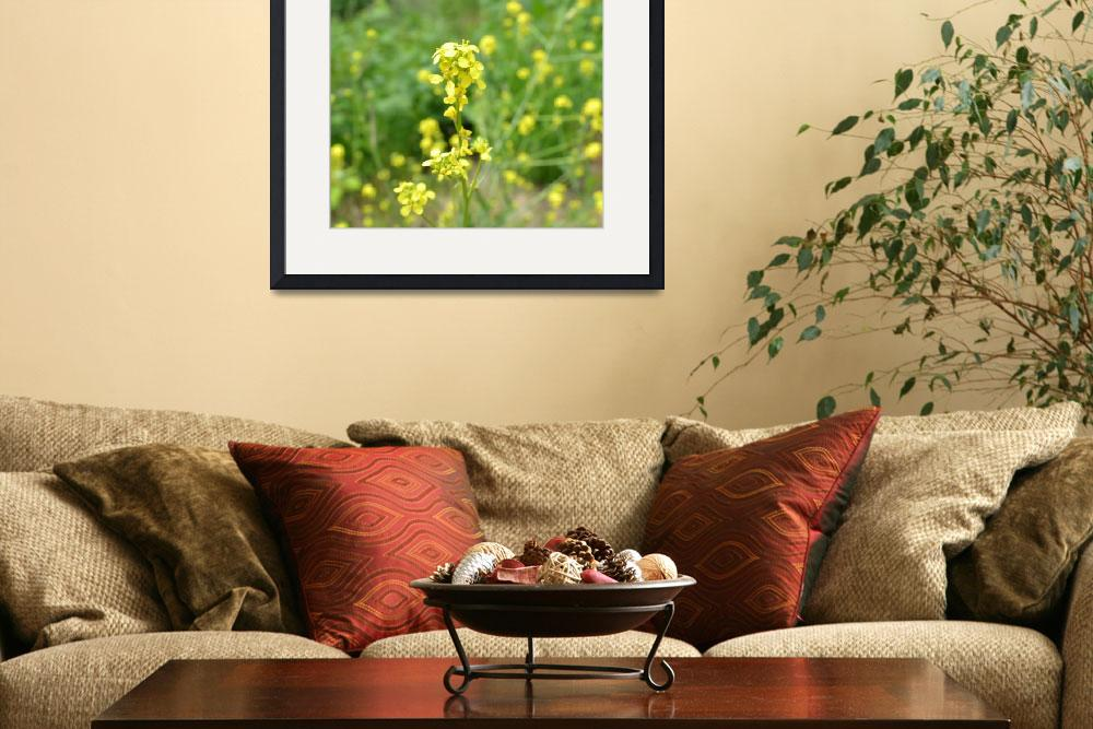"""""""Yellow Flowers in June II&quot  (2011) by PatriciaSanders"""