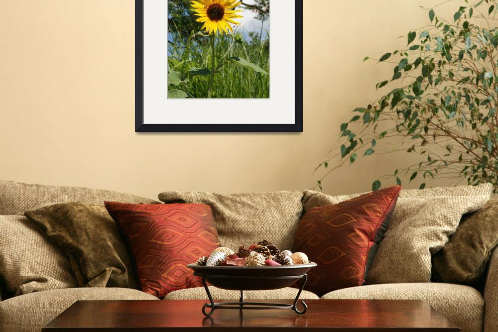 """""""Sunflower&quot  (2009) by sarahme220"""