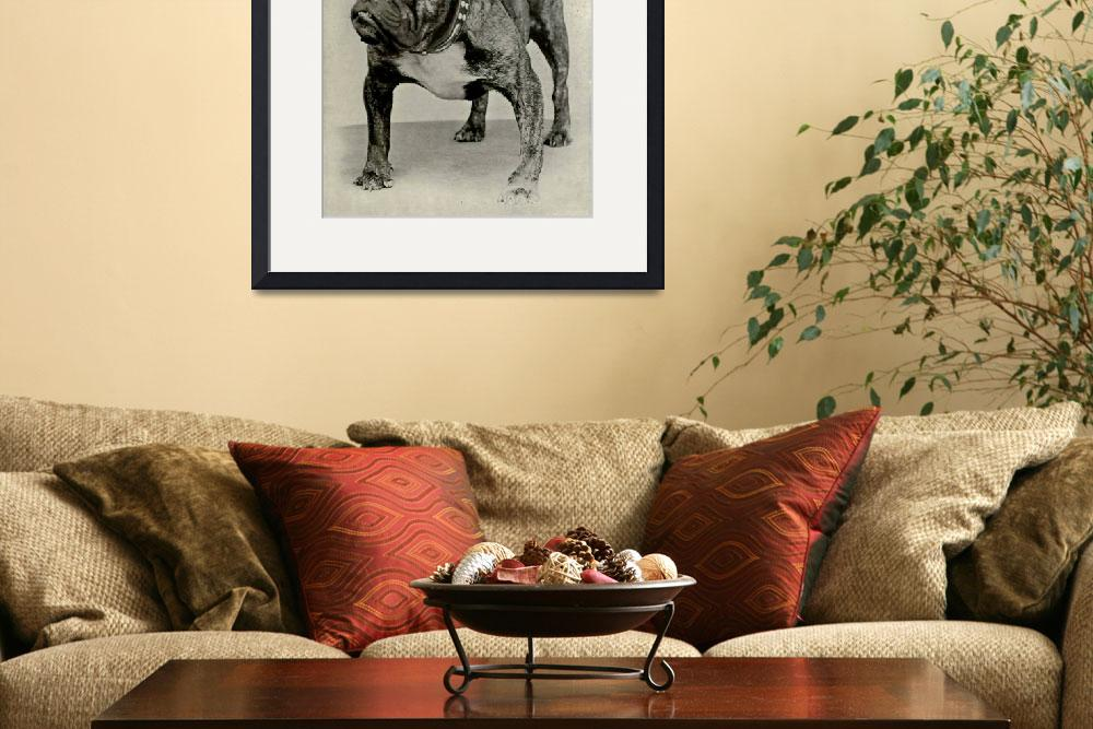 """Vintage English Bulldog Photograph&quot  by Alleycatshirts"