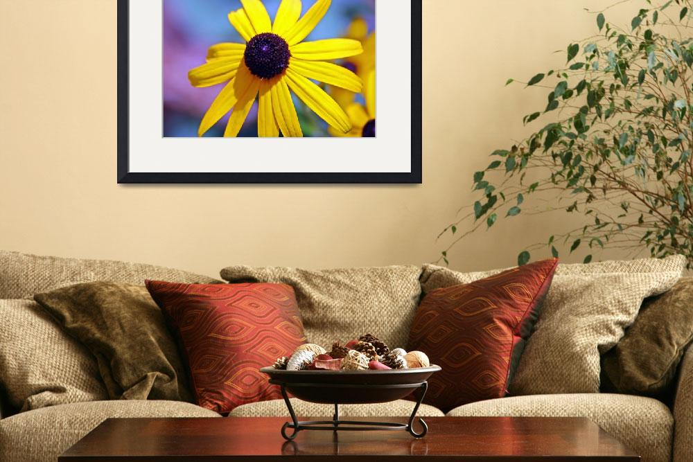 """""""Black Eyed Susan&quot  by TouchofSoulPhotography"""