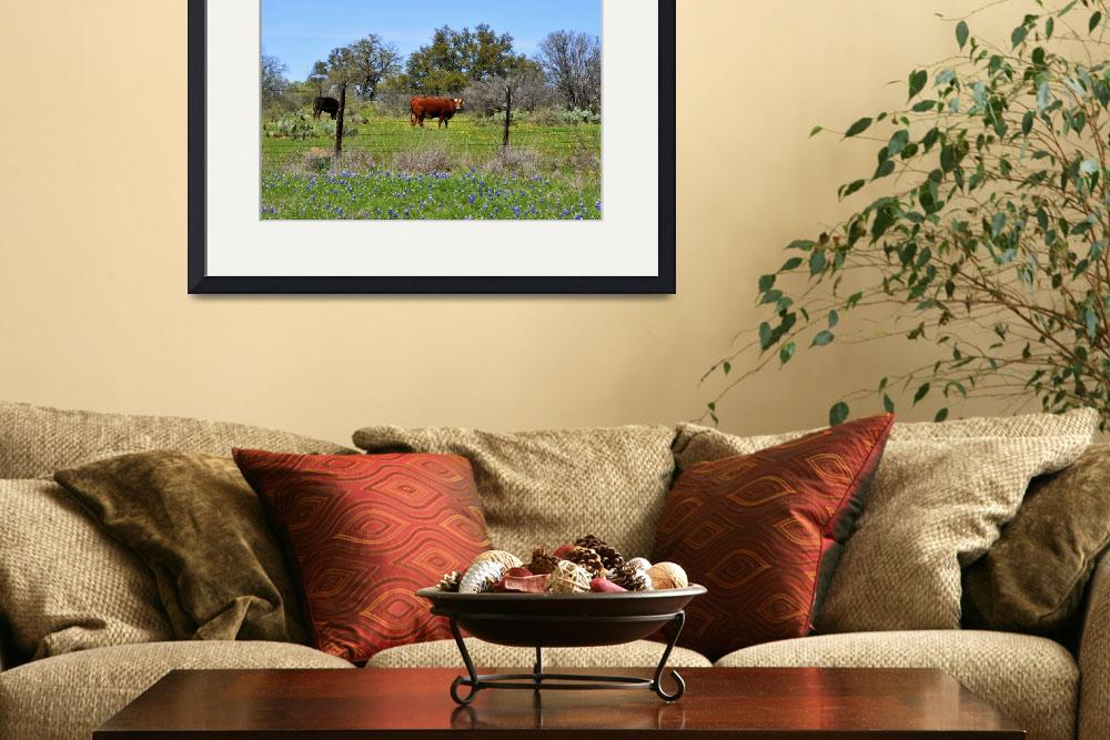 """""""Cows and Bluebonnets&quot  by judimage"""