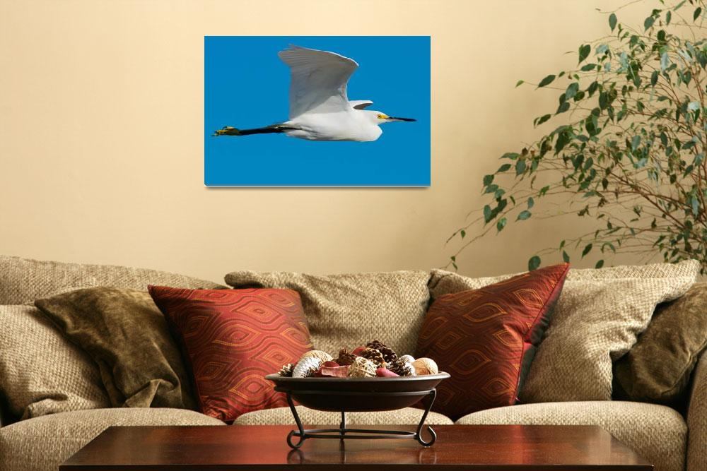 """Snowy Egret Flying""  (2013) by NatureAsArt"