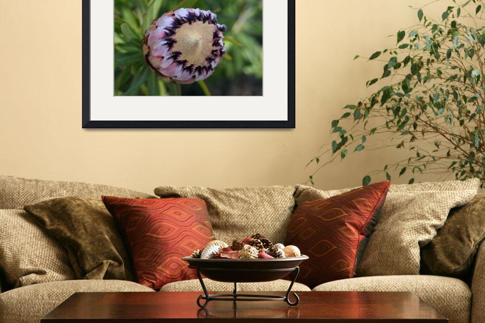 """""""Protea neriifolia&quot  (2010) by Sonja"""