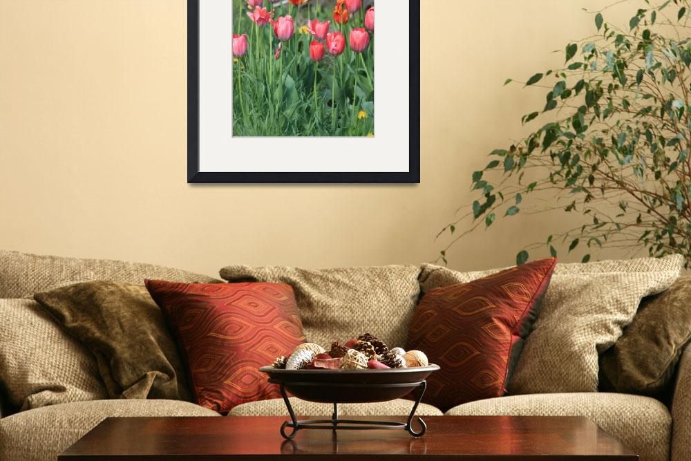 """""""Tulips of many colors&quot  (2010) by dunklebob"""