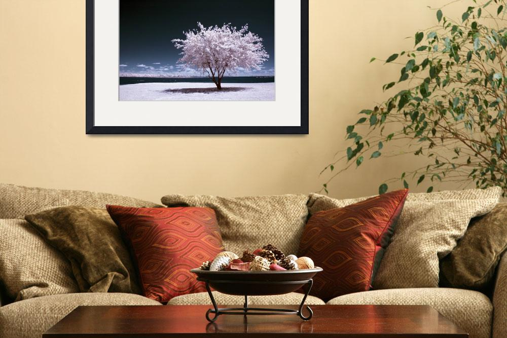 """""""a winter summer - infrared tree landscape&quot  (2007) by miir"""