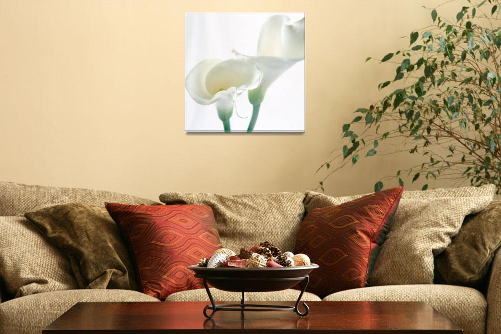 """Calla Lilly 3""  (2006) by AnnaMiller"