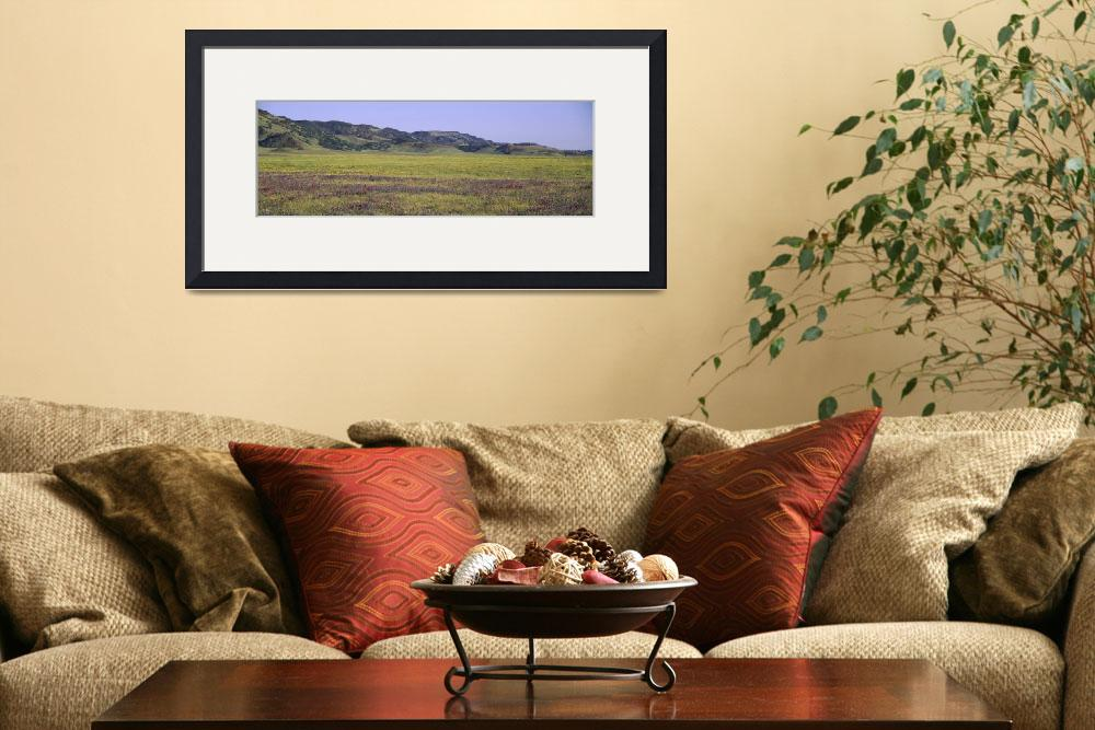"""""""""""Wildflowers in a field, Clearlake, Lake County, C&quot  by Panoramic_Images"""
