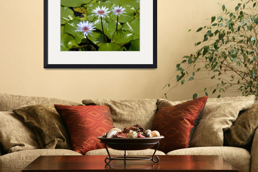 """""""Cayman Islands Lily Pond&quot  by RonScott"""