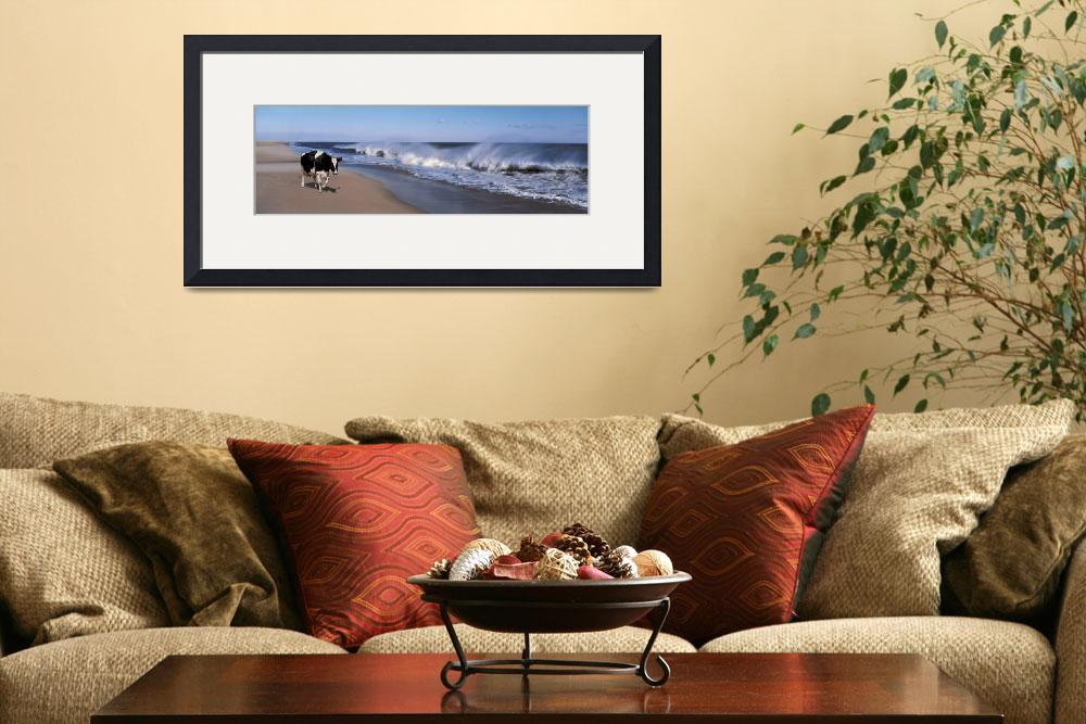 """cow on the beach&quot  (2003) by atlasphotographic"