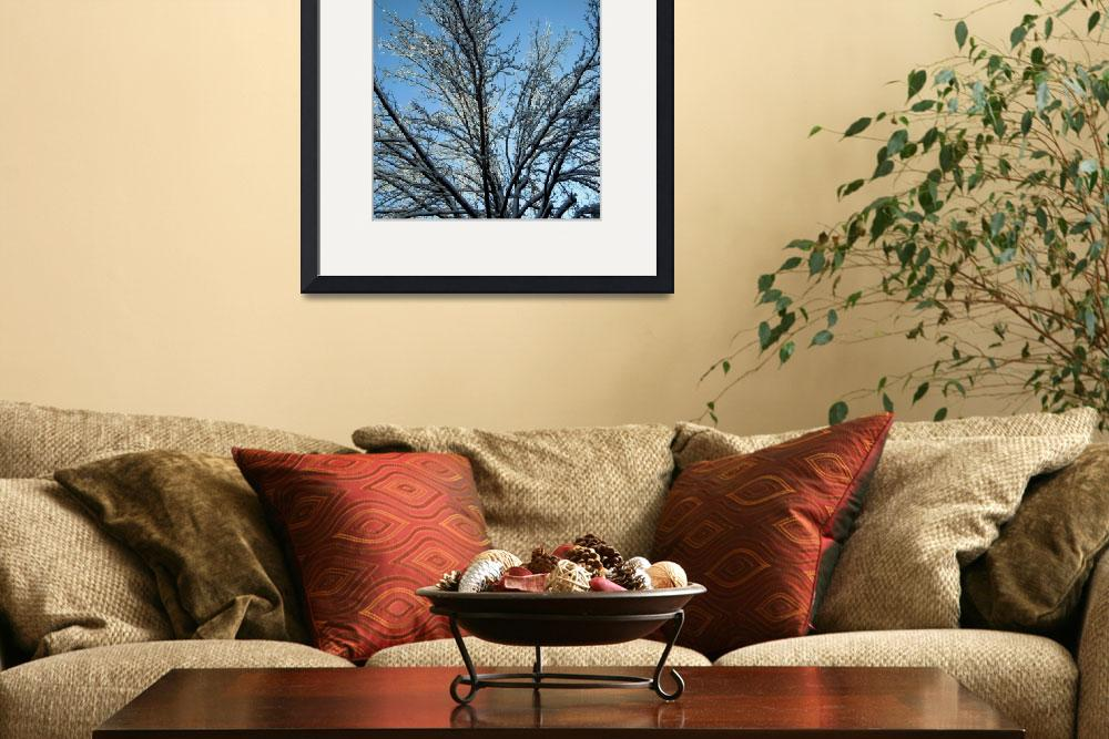 """""""icy branches 2&quot  (2010) by candicecruzphotography"""