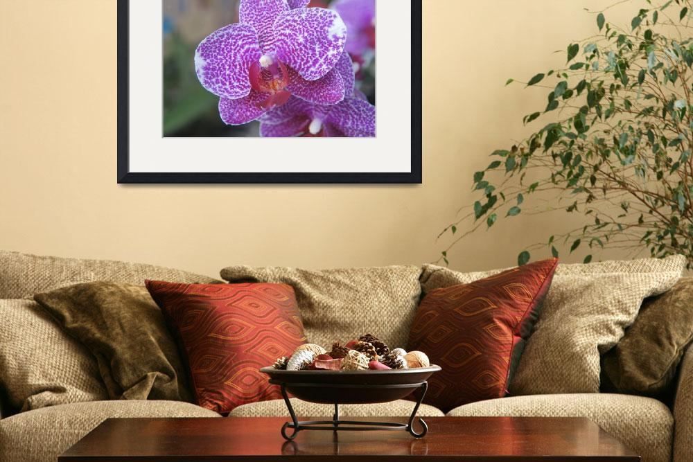 """""""Orchids Collection 02&quot  (2012) by mrosley"""