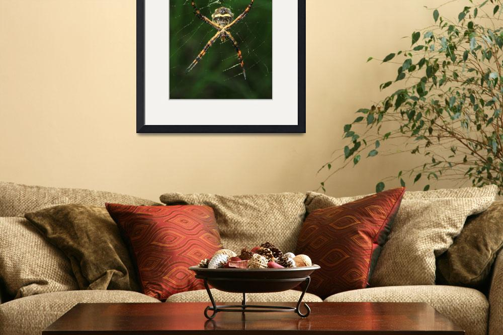 """Orb Weaver Spider in a Web&quot  (2015) by rhamm"