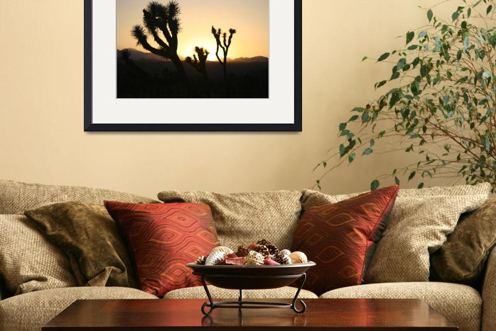 """""""Joshua Tree Sunset&quot  (2008) by carloslopezdrums"""