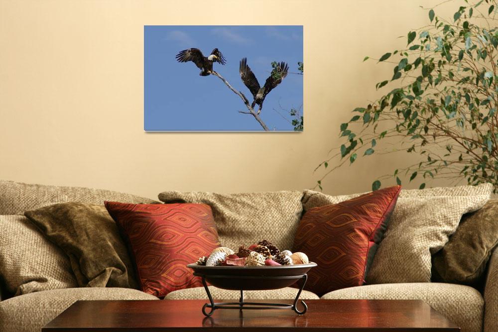 """Bald Eagle Pair""  by cameragal"